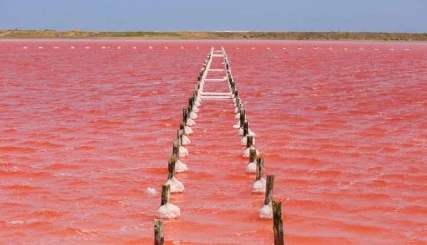Cartagena Pink Sea